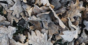 boost skin moisture winter