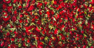 Rose Extract Skincare