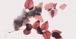 Ritual de belleza de otoño Autumn Skincare Routine